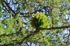 Растительные диковинки